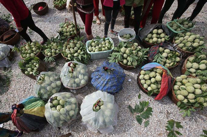 Đây đang là thời điểm đầu mùa thu hoạch nhưng người dân từ Chi Lăng, Hữu Lũng, Cai Kinh, Hòa Lộc... đã đổ về chợ để tiêu thụ.