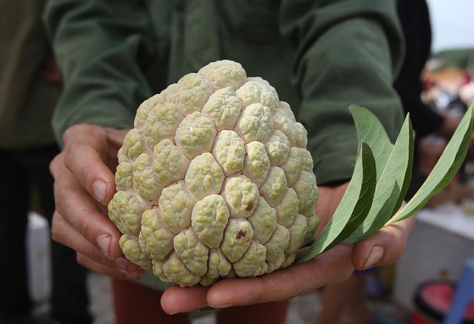Người dân trồng na ở huyện Chi Lăng cho biết, na năm nay được giá và quả to nên dễ bán hơn.