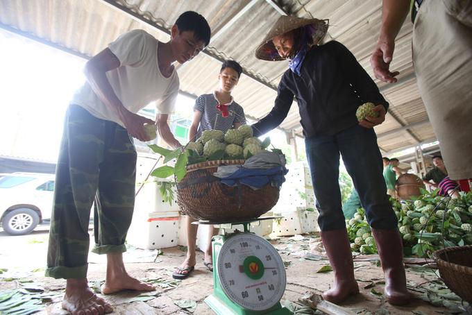 """Quả na nặng 1,1 kg. Chị Hoàng Thị Thi, thôn Đồng Bành, thị trấn Chi Lăng nói: """"Đây là những quả na đầu tiên của mùa này, cả vườn hơn 1.000 cây thì chỉ được 1-2 quả na to như vậy. Trong vườn cũng đã từng thu hoạch được quả nặng tới 1,7 kg. Giá của loại này khoảng gần 100.000 đồng một kg"""". Quả na lớn thường chỉ xuất hiện ở cây có tuổi thọ trên 8 tuổi. Na có vẻ ngoài không quá to nhưng ruột nặng, ăn có vị ngọt đậm, mắt sáng, tròn đều, mát thanh và hiếm gặp."""