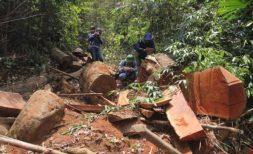 Cán bộ kiểm lâm Quảng Nam bị bắt và khởi tố vụ án phá rừng