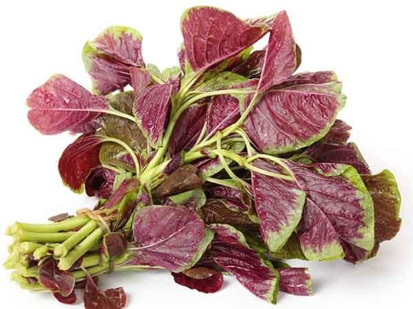 Điểm tên 5 loại rau có nhiều canxi, giàu chất dinh dưỡng nhất