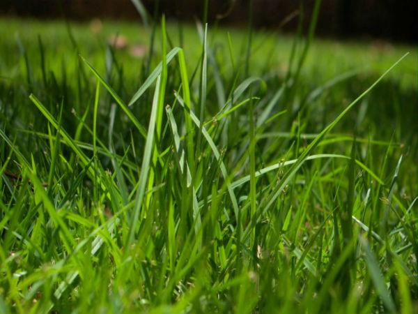 Mơ thấy cỏ là điềm tốt hay xấu?